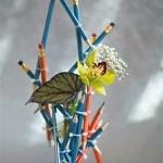 2008flora-03.jpg