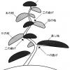 Карикоми растений в японском саду